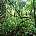 EC1 - Intelligent Jungle Vibes 94/95 - 7.2.21