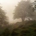 """""""Sauvage"""", une pièce de Tchekhov au coeur des bois dans les Vosges"""