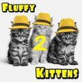 Fluffy Kittens - 2nd Kitten