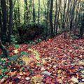 Autumn in Dub :: October 2020