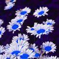 The Metamorph Presents : Luminous Flowers