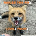 MOUSE THE FOX - LOVELY FRANNY - VOL.25 - 13.06.2021