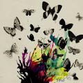 Sound Barrier :: The Butterfly Effect September 2017