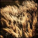autumna | ejcw Profile Image