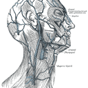 Campbell Cole Profile Image