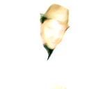 Madman Profile Image
