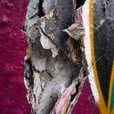 Nikko 2 fOO Profile Image