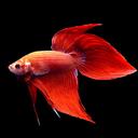 zaki / liquortearsman Profile Image