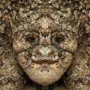 猿 Profile Image