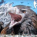 Da Bird's Nest
