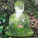 mossybuddha Profile Image