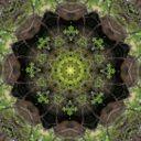 Vegetable Matrix Profile Image