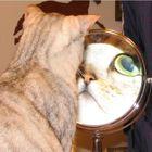 beezerholmes Profile Image
