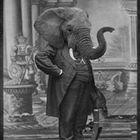 Adrianus Barbarius Profile Image