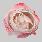 Budos Profile Image