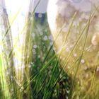 Whispertrent Profile Image