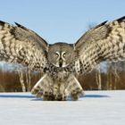 Bass Owl Profile Image