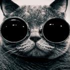 Chibers Profile Image