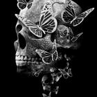 Reiseleiter Schmetterling Profile Image