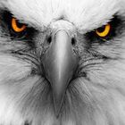 Tomfire McMonster Profile Image