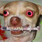 Rabid Gravy Profile Image
