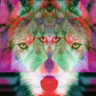 moondoggy_portal Profile Image