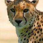 gepard Profile Image
