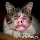 Eggy Wallop Profile Image