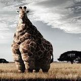 Sonic Switch Giraffe DJ Mix by Robert Luis (Tru Thoughts)