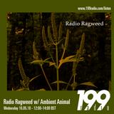 16/05/18 - Radio Ragweed w/ Ambient Animal