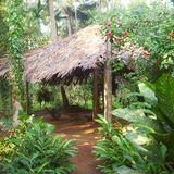 Lounge Jungle