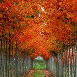 Fall is Coming mix... Vuelo Directo B2B
