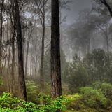 aaron - walking in the jungle