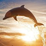 TRAVISWILD's Animal Kingdom Radio 022 - Dolphin