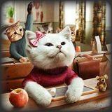 """Γάτες από Σόι - """"Επιστροφή στα Θρανία"""" - 10.09.2017"""