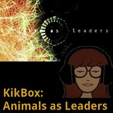KikBox: Animals as Leaders