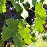Sobre la crisis en la producción vitivinícola, hablamos con Jose María Llaver de APA