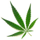 Vox Pop - 23Mar - Legalização da Cannabis - Sim ou Não?