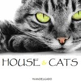 House & Cats (live) Yvan Delgado
