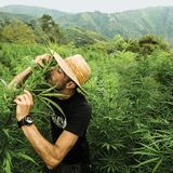 Padlock Daily Dose 7 : Jungle