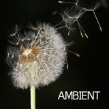 AMBIENT  - THE ESSENTIAL DOCUMENTARY