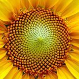 Golden Spiral Mix