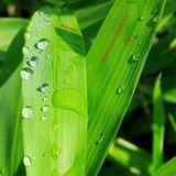 Chlorophyll Teil 1