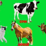 Radio: The Movie - Animals Special