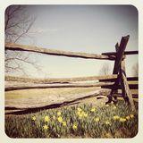 Spring 2013 // April II