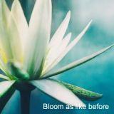Bloom as like before