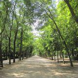 -- Paseo Por el Parque -- Dj Set