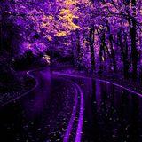 Sunset Boulevard by ianK (28.12.2015)