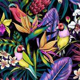 > brazilianwonders #2 [ batuques, samba, samba jazz, samba rock ]