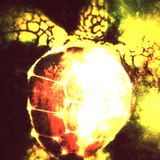 cosmic turtle uplifting @ plutonium klub ... salex